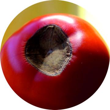 Дефицит калия у помидор